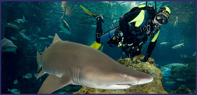 inmersion-con-tiburones