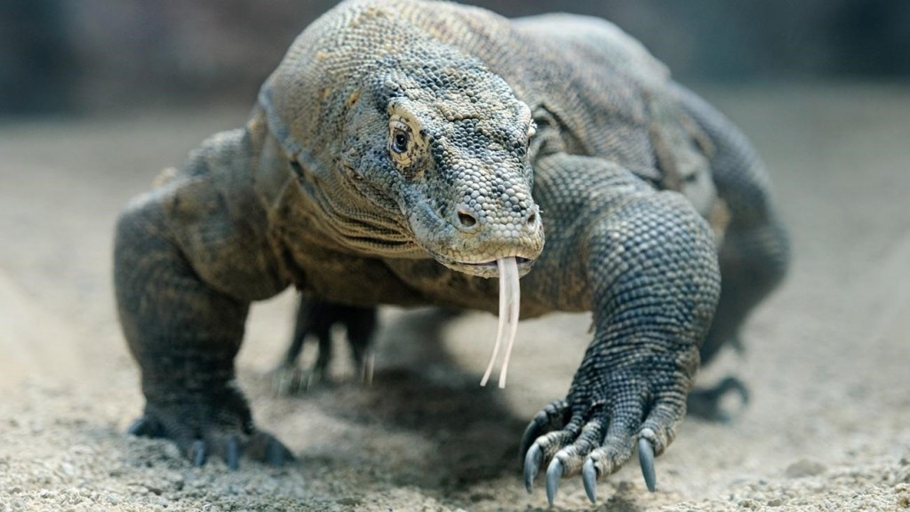 dragons barcelona zoo-min