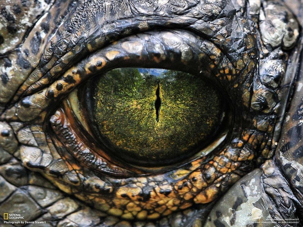 reptiles Barcelona zoo-min