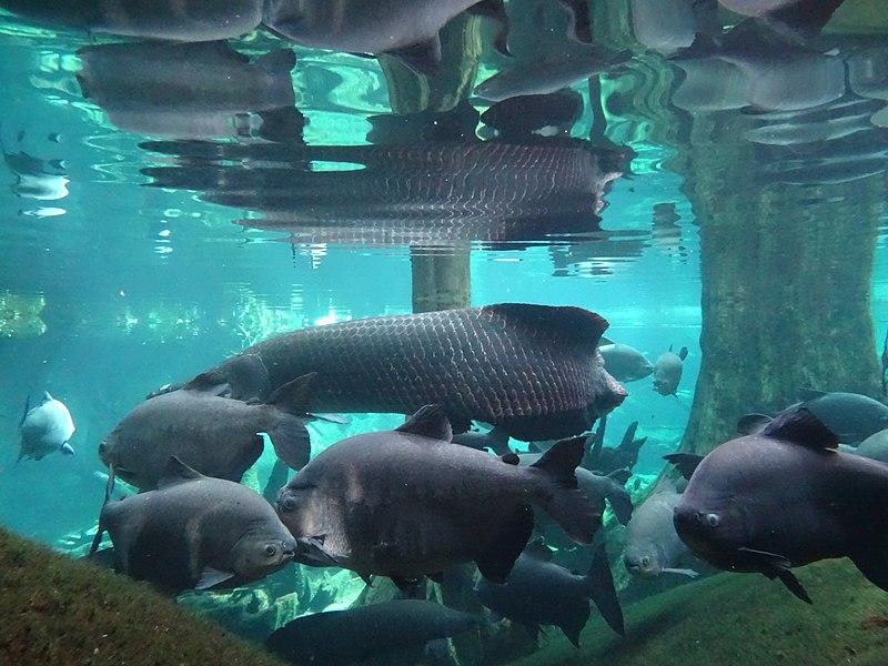 CosmoCaixa Aquarium